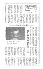 20130905聖教新聞アオアシシギ